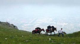 """""""Vola con i muli"""", una giornata all'insegna della natura"""