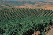 Bianco, rosso…ma soprattutto green: il vino italiano diventa eco