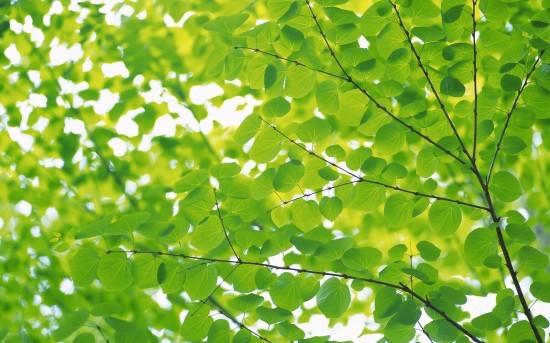 Deyute, green economy come chiave del successo aziendale