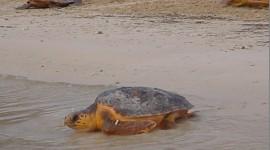 Lampedusa isola green, la Tartaruga Caretta Caretta la sceglie per le sue uova!