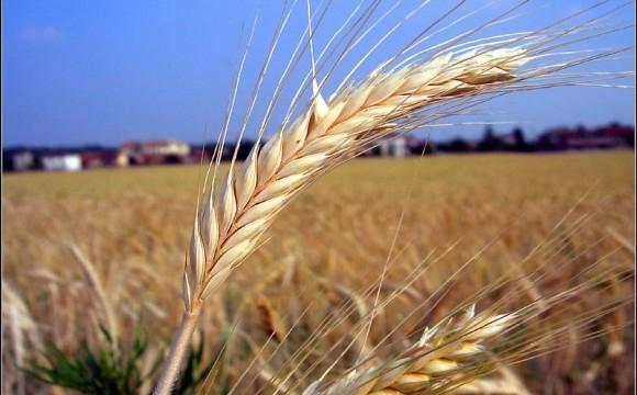 Cambiare l'agricoltura per ridurre la CO2 in atmosfera?