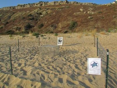 Sicilia sempre più green, ad Agrigento un nido della tartaruga Caretta Caretta