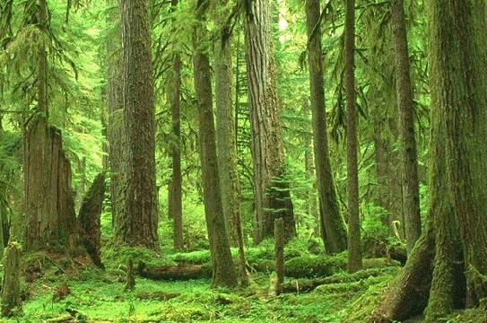 Foreste e oceani in aiuto dell'ecosistema!