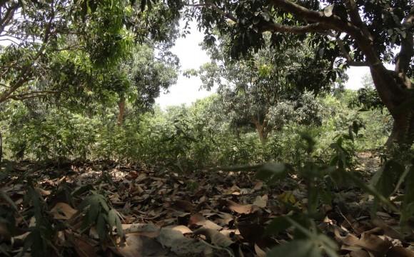 Premio Onu per la gestione foreste…in Nepal!