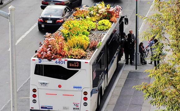 Bus e pensiline verdi. Il trasporto statunitense è green
