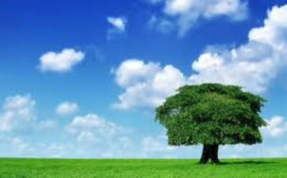 Un albero per ogni neonato, la legge alimenta la vita e l'ambiente