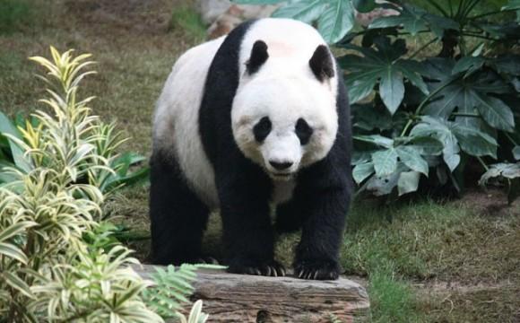Gioielli con il panda: nuove creazioni firmate Misis