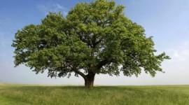 Bolletta on-line: quanto l'utente tutela la natura