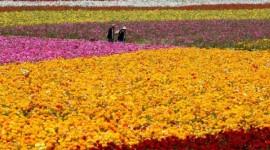 Flor13: Torino si colora di verde grazie alla mostra mercato dei fiori