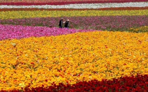 Corso per coltivare le Piante Aromatiche a Rovato – Brescia