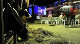 Moffe 2013, la quinta edizione del festival del cinema green