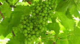 Anche il vitivinicolo vuole essere sostenibile