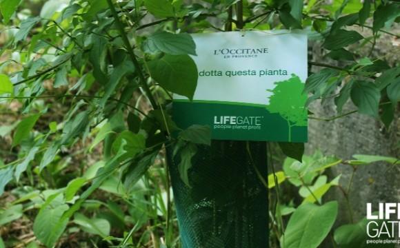 La Bellezza salverà il mondo: al via l'iniziativa L'Occitane e Lifegate