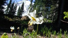 La Associazioni ambientaliste chiedono stabilità per i parchi naturali