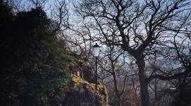 Hera: in un anno 1.000 alberi grazie alla bolletta on-line