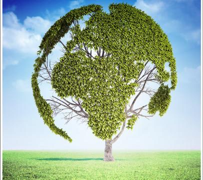 WiGreen: ridurre gli sprechi e aumentare la sostenibilità