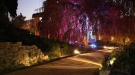"""""""M'illumino di meno"""": Performance in Lighting colora il faggio pendulo di AmbienteParco"""