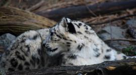 Una giornata di scialpinismo a sostegno del leopardo delle nevi