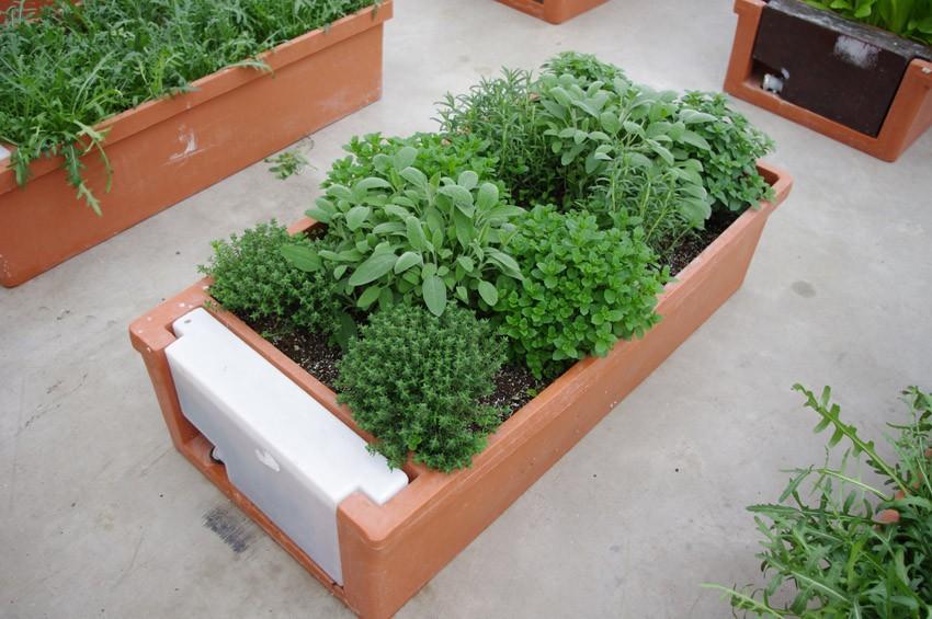 Orto urbano: Hobby Orto per coltivare sul balcone -