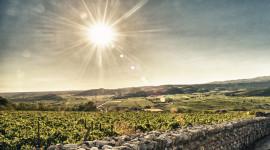 Sostenibilità nel Soave: parte la Green label per tutta la doc