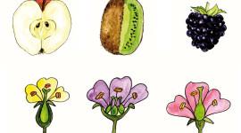 """La Rete degli Orti botanici realizza le """"schede di campo"""""""