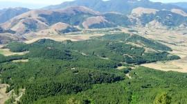 La boscosa Toscana con l'Accademia Italiana di Scienze Forestali ad Expo per parlare di green economy