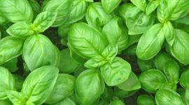 Erbe aromatiche: i benefici che non ti aspetti