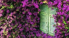 Sorge un giardino verticale sulle persiane di Co.Bu.