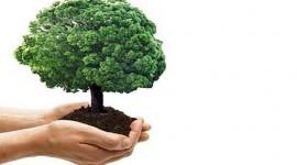 Take away usa e getta nel rispetto dell'ambiente