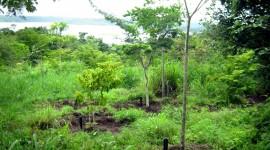 Il Brasile si schiera a (s)favore delle foreste, cosa succederà?