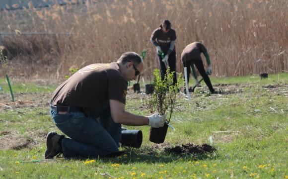 Global Volunteer Month: UPS si impegna a piantare un altro milione di alberi