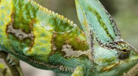 """""""David Attenborough e le curiosità della natura"""" su BBC Knowledge"""