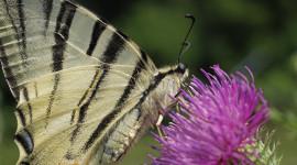Il santuario delle farfalle all'Elba