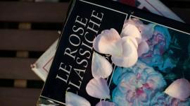 Con l'officina botanica di Castello Quistini i segreti della coltivazione delle rose