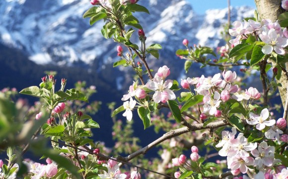 La festa della fioritura e il segreto dei fiori ghiacciati