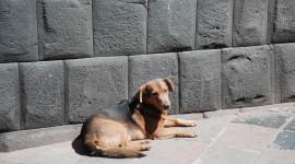 Rapporto Animali in Città, l'indagine di Legambiente sulla tutela degli amici a quattro zampe