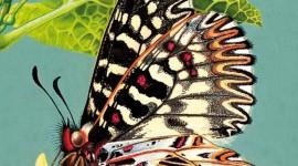 """""""L'arte di raccontare la natura"""": passeggiata letteraria con l'autore"""