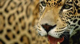 Con WWF per salvare la foresta Amazzonica