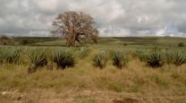 Kenya Wildlife Service: impegno costante per la conservazione