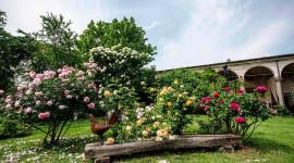 Castello Quistini, la straordinaria fioritura delle rose