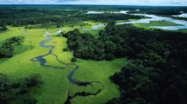WWF: Non 'mangiamoci' l'Amazzonia