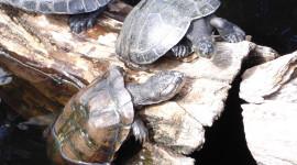 WWF: hanno raggiunto il mare 22 nuovi piccoli di tartaruga marina