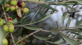 Caldaie policombustibili a biomassa: riscaldare casa con mais e olive
