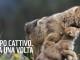 """""""Balla coi lupi"""", Flash-mob in 10 piazze italiane per la campagna #soslupo"""