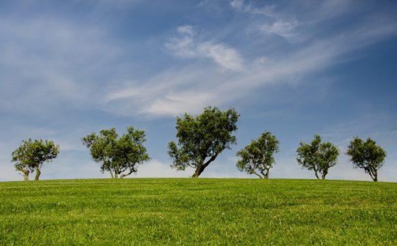 Dieci consigli per ridurre il proprio impatto ambientale e aiutare il pianeta