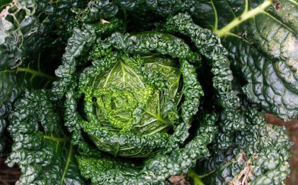 ManoMano.it e la permacultura: i cinque consigli per una vita più eco-friendly
