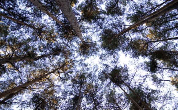 Dalla gestione sostenibile della foresta al legno come materiale da costruzione, nel pieno rispetto dell'ambiente